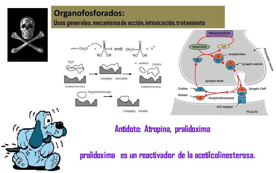 Organofosforados: Usos generales, mecanismo de acción, intoxicación, tratamiento Antídoto: Atropina, pralidoxima pralidoxima es un reactivador de la a