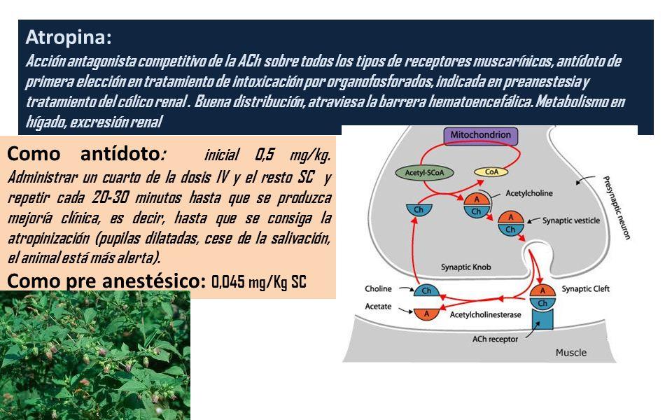 Atropina: Acción antagonista competitivo de la ACh sobre todos los tipos de receptores muscarínicos, antídoto de primera elección en tratamiento de in