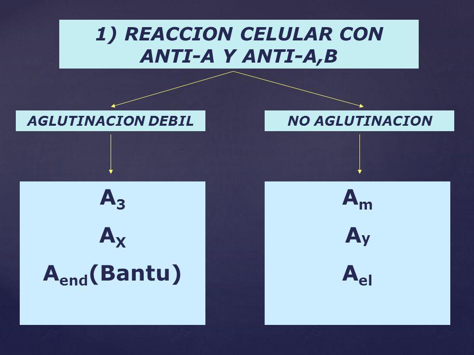 1) REACCION CELULAR CON ANTI-A Y ANTI-A,B AGLUTINACION DEBILNO AGLUTINACION A 3 A X A end (Bantu) A m A y A el