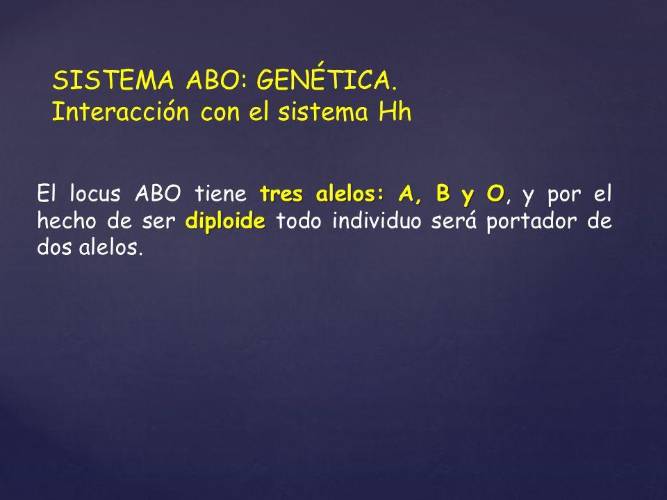 SISTEMA ABO: GENÉTICA. Interacción con el sistema Hh tres alelos: A, B y O diploide El locus ABO tiene tres alelos: A, B y O, y por el hecho de ser di