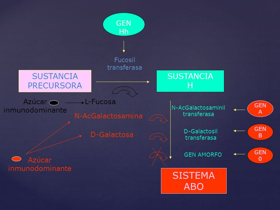 GEN Hh Fucosil transferasa SUSTANCIA PRECURSORA SUSTANCIA H SISTEMA ABO GEN A GEN B GEN 0 N-AcGalactosaminil transferasa D-Galactosil transferasa GEN