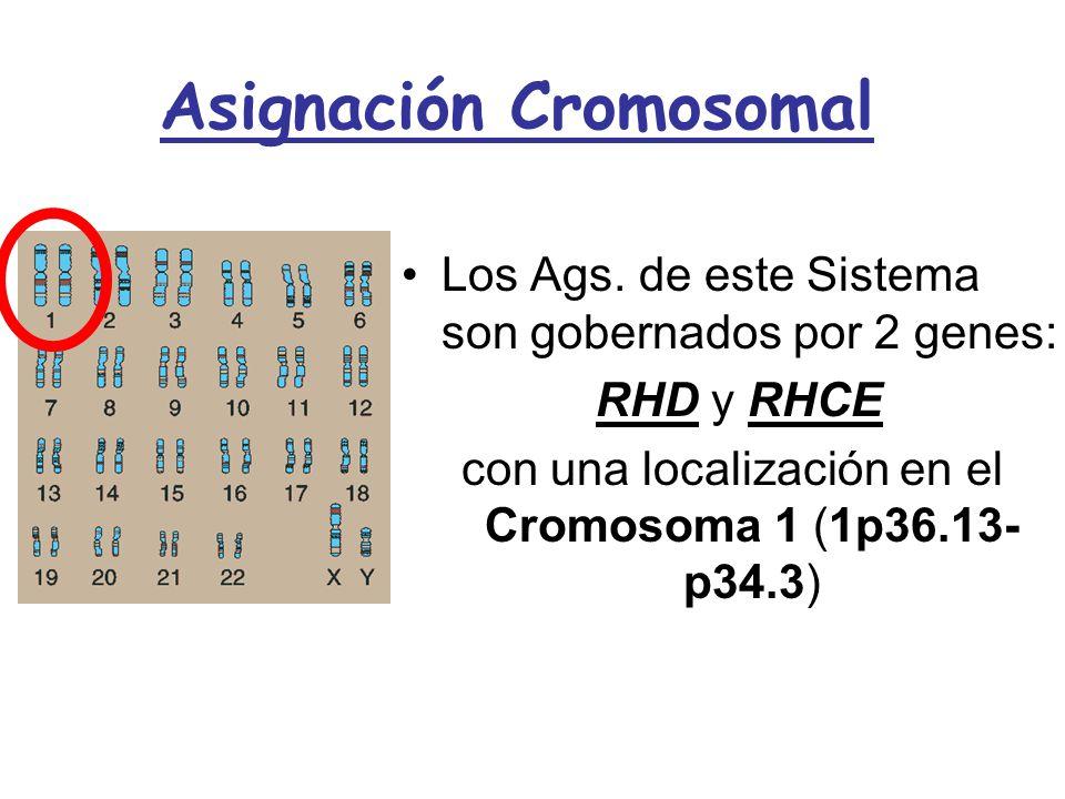 Asignación Cromosomal Los Ags. de este Sistema son gobernados por 2 genes:Los Ags. de este Sistema son gobernados por 2 genes: RHD y RHCE RHD y RHCE c