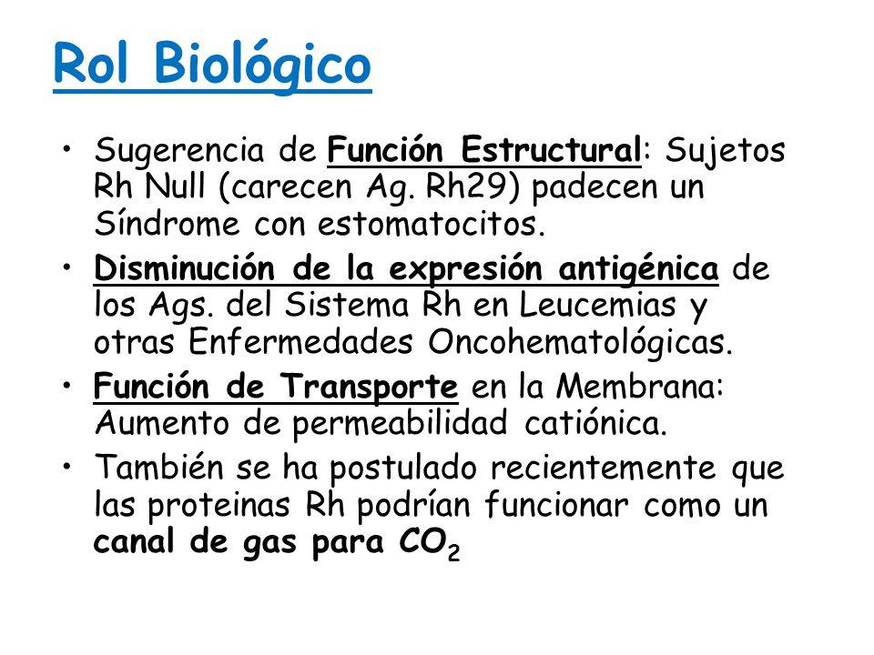 Rol Biológico Sugerencia de Función Estructural: Sujetos Rh Null (carecen Ag. Rh29) padecen un Síndrome con estomatocitos.Sugerencia de Función Estruc