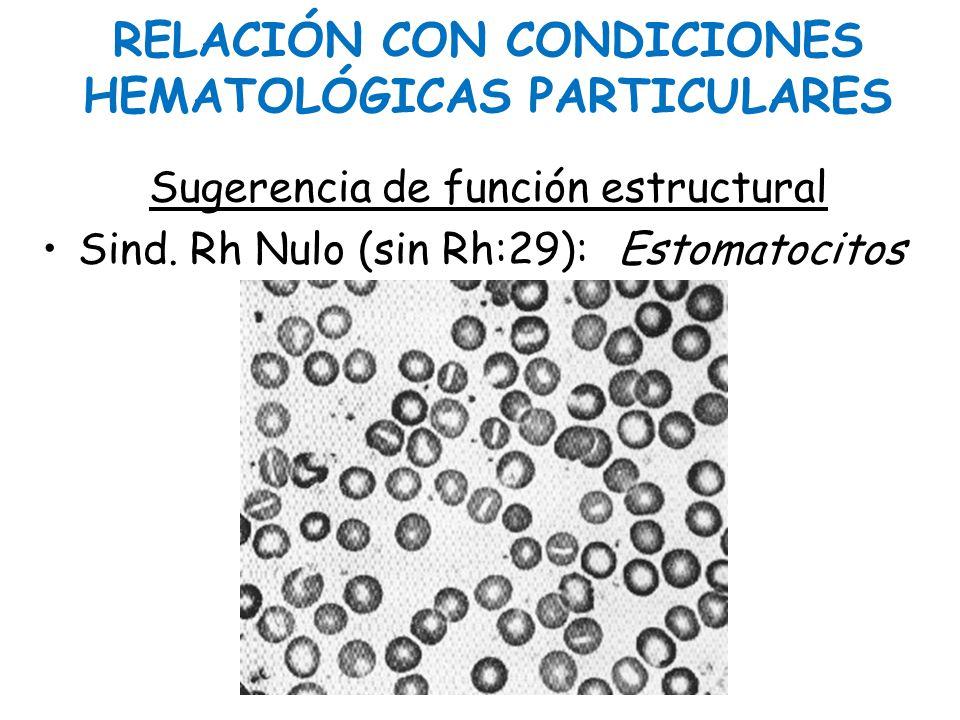 RELACIÓN CON CONDICIONES HEMATOLÓGICAS PARTICULARES Sugerencia de función estructural Sind. Rh Nulo (sin Rh:29): Estomatocitos