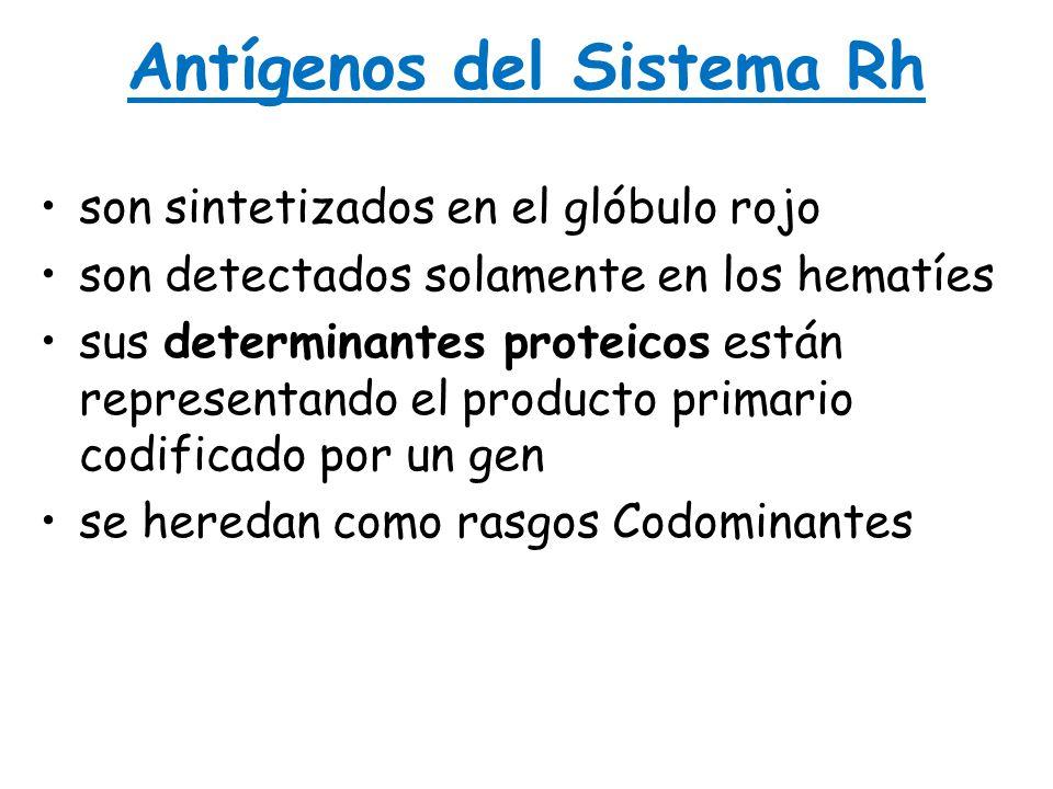 Antígenos del Sistema Rh son sintetizados en el glóbulo rojoson sintetizados en el glóbulo rojo son detectados solamente en los hematíesson detectados