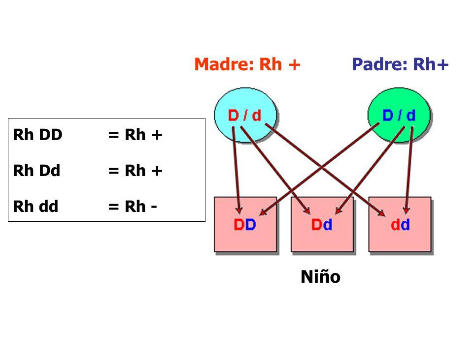Madre: Rh + Padre: Rh+ Niño Rh DD= Rh + Rh Dd = Rh + Rh dd = Rh -