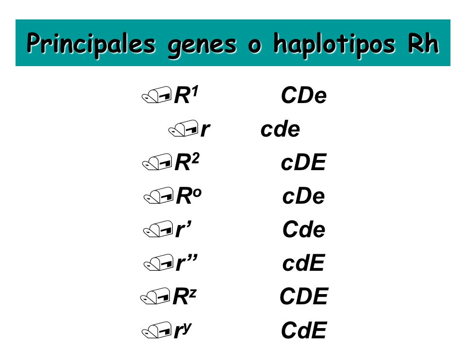 Principales genes o haplotipos Rh /R 1 CDe /rcde /R 2 cDE /R o cDe /rCde /rcdE /R z CDE /r y CdE
