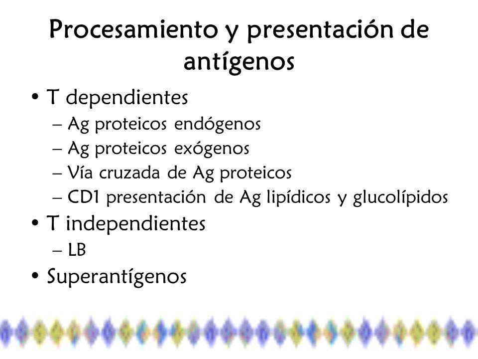 Procesamiento y presentación de antígenos T dependientes –Ag proteicos endógenos –Ag proteicos exógenos –Vía cruzada de Ag proteicos –CD1 presentación de Ag lipídicos y glucolípidos T independientes –LB Superantígenos