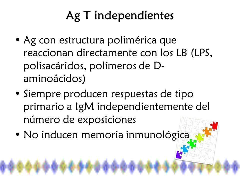 Ag T independientes Ag con estructura polimérica que reaccionan directamente con los LB (LPS, polisacáridos, polímeros de D- aminoácidos) Siempre producen respuestas de tipo primario a IgM independientemente del número de exposiciones No inducen memoria inmunológica