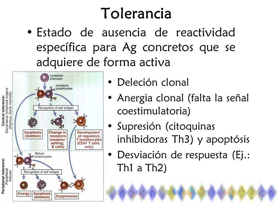 Tolerancia Estado de ausencia de reactividad específica para Ag concretos que se adquiere de forma activa Deleción clonal Anergia clonal (falta la señal coestimulatoria) Supresión (citoquinas inhibidoras Th3) y apoptósis Desviación de respuesta (Ej.: Th1 a Th2)