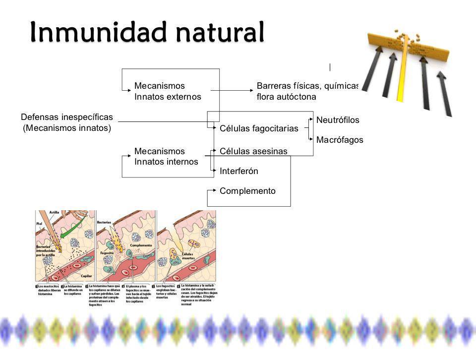 Piel y Mucosas