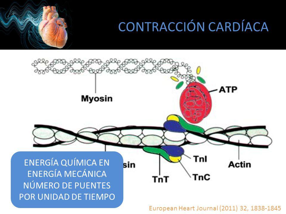 CONTRACCIÓN CARDÍACA European Heart Journal (2011) 32, 1838-1845 ENERGÍA QUÍMICA EN ENERGÍA MECÁNICA NÚMERO DE PUENTES POR UNIDAD DE TIEMPO