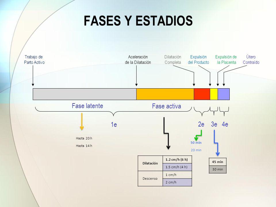 Fase latente Fase activa 1e 2e3e4e Dilatación Completa Expulsión del Producto Expulsión de la Placenta Útero Contraído Trabajo de Parto Activo Acelera