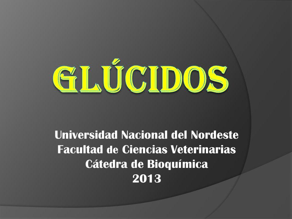 Universidad Nacional del Nordeste Facultad de Ciencias Veterinarias Cátedra de Bioquímica 2013