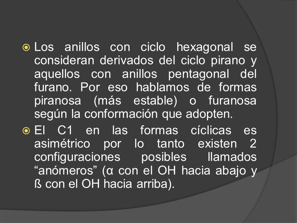 Los anillos con ciclo hexagonal se consideran derivados del ciclo pirano y aquellos con anillos pentagonal del furano. Por eso hablamos de formas pira