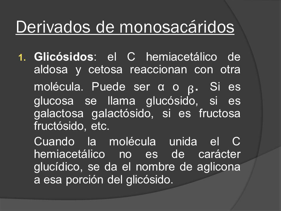 Derivados de monosacáridos 1. Glicósidos: el C hemiacetálico de aldosa y cetosa reaccionan con otra molécula. Puede ser α o. Si es glucosa se llama gl