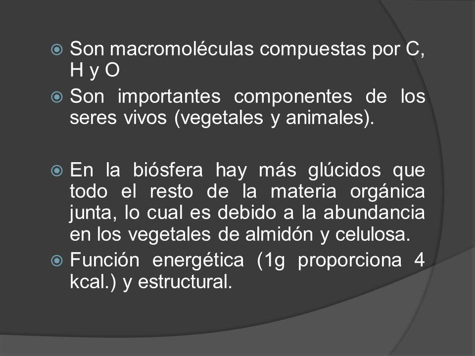 Son macromoléculas compuestas por C, H y O Son importantes componentes de los seres vivos (vegetales y animales). En la biósfera hay más glúcidos que