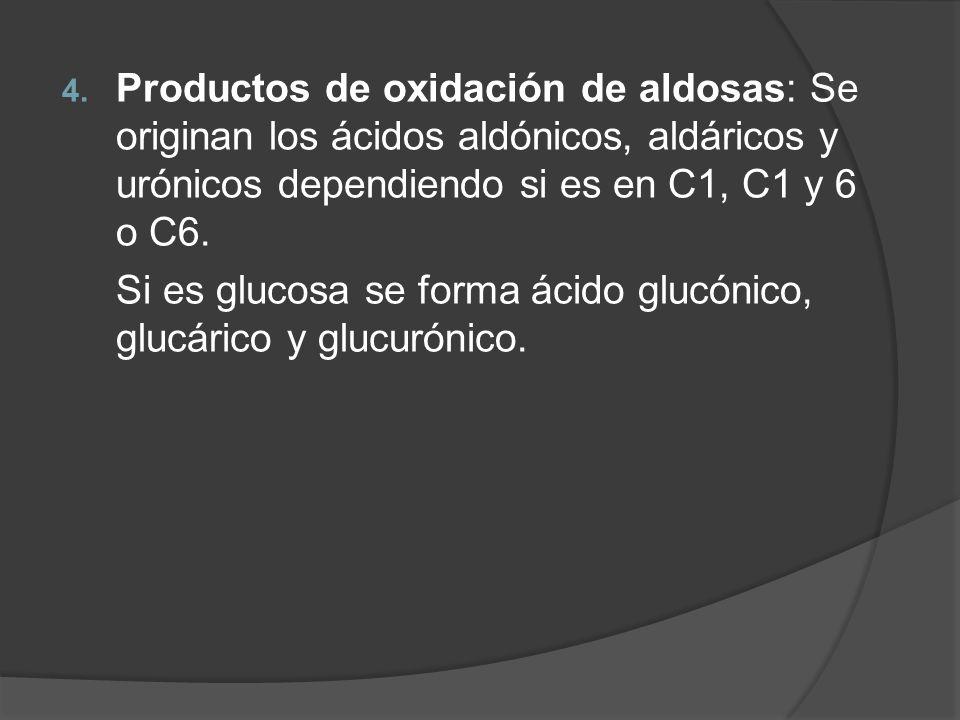 4. Productos de oxidación de aldosas: Se originan los ácidos aldónicos, aldáricos y urónicos dependiendo si es en C1, C1 y 6 o C6. Si es glucosa se fo