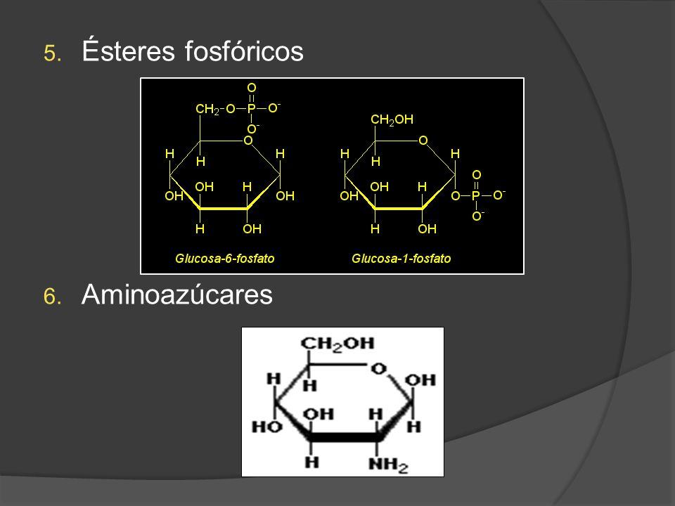 5. Ésteres fosfóricos 6. Aminoazúcares