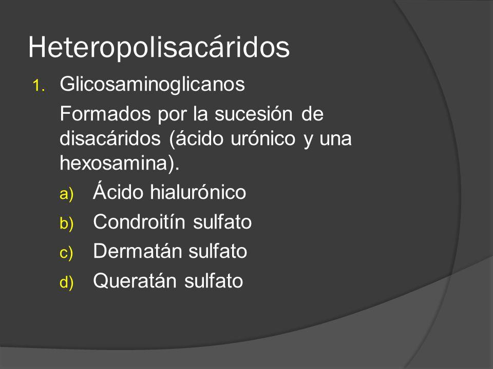 Heteropolisacáridos 1. Glicosaminoglicanos Formados por la sucesión de disacáridos (ácido urónico y una hexosamina). a) Ácido hialurónico b) Condroití