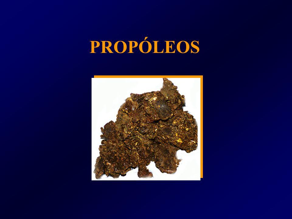 PROPÓLEOS