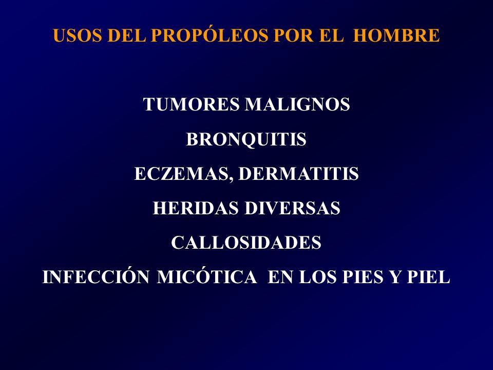 USOS DEL PROPÓLEOS POR EL HOMBRE TUMORES MALIGNOS BRONQUITIS ECZEMAS, DERMATITIS HERIDAS DIVERSAS CALLOSIDADES INFECCIÓN MICÓTICA EN LOS PIES Y PIEL