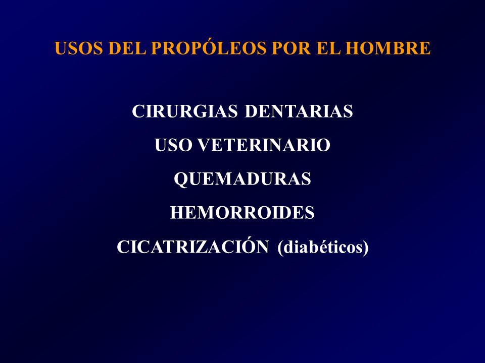 USOS DEL PROPÓLEOS POR EL HOMBRE CIRURGIAS DENTARIAS USO VETERINARIO QUEMADURAS HEMORROIDES CICATRIZACIÓN (diabéticos)