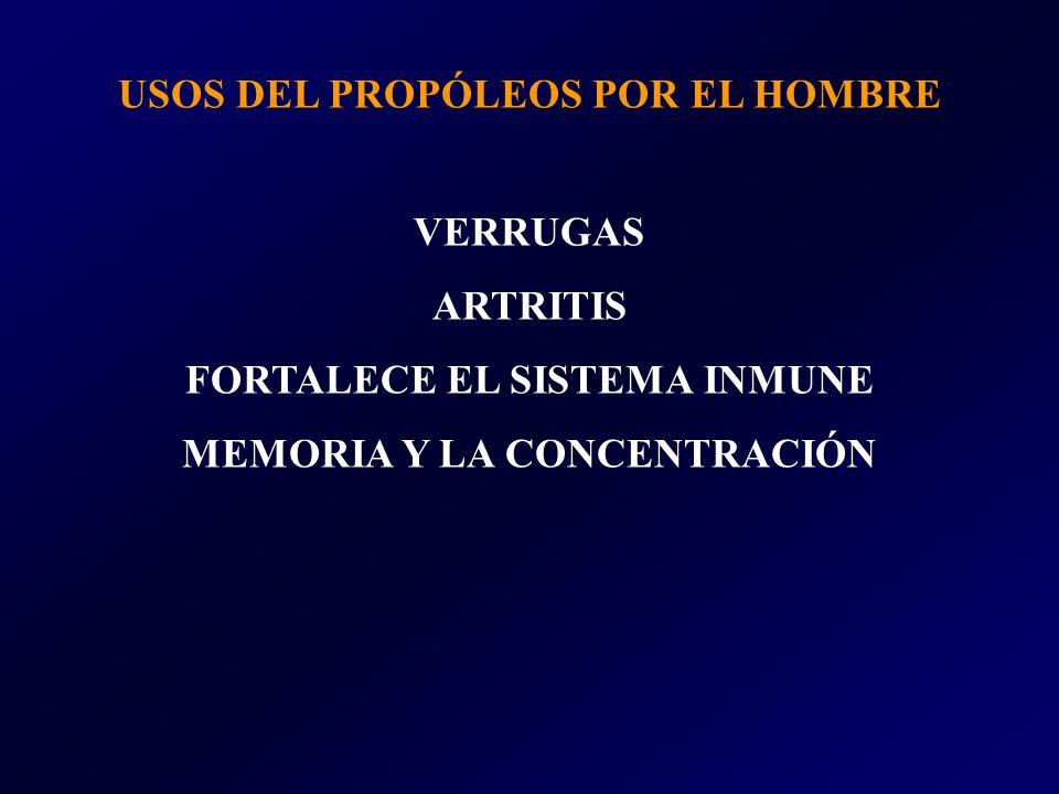 USOS DEL PROPÓLEOS POR EL HOMBRE VERRUGAS ARTRITIS FORTALECE EL SISTEMA INMUNE MEMORIA Y LA CONCENTRACIÓN