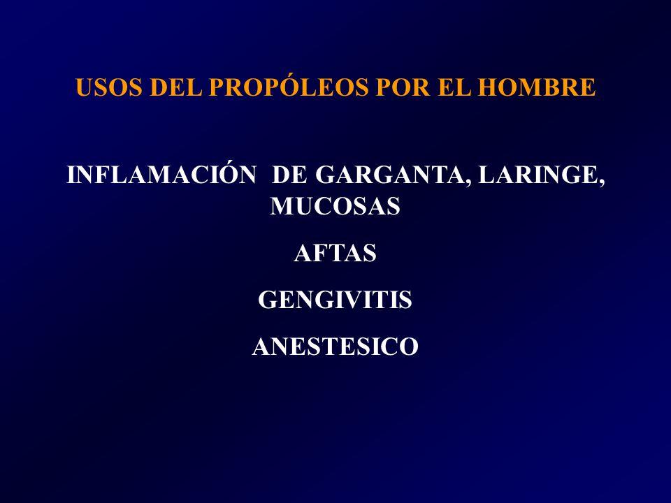 USOS DEL PROPÓLEOS POR EL HOMBRE INFLAMACIÓN DE GARGANTA, LARINGE, MUCOSAS AFTAS GENGIVITIS ANESTESICO