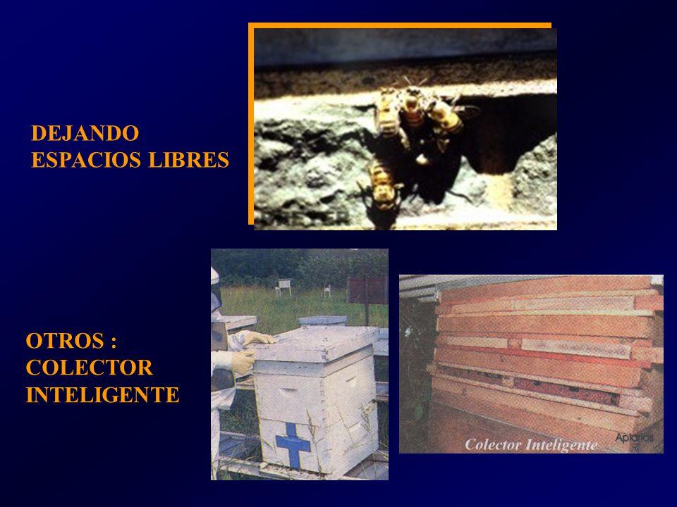 OTROS : COLECTOR INTELIGENTE DEJANDO ESPACIOS LIBRES