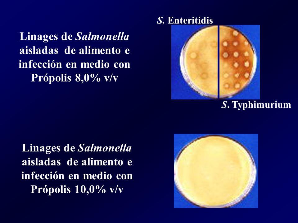 Linages de Salmonella aisladas de alimento e infección en medio con Própolis 8,0% v/v S. Enteritidis S. Typhimurium Linages de Salmonella aisladas de