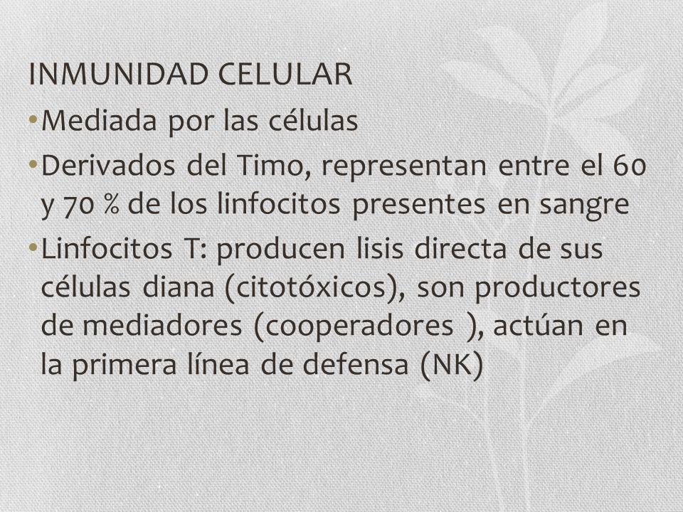 INMUNIDAD CELULAR Mediada por las células Derivados del Timo, representan entre el 60 y 70 % de los linfocitos presentes en sangre Linfocitos T: produ