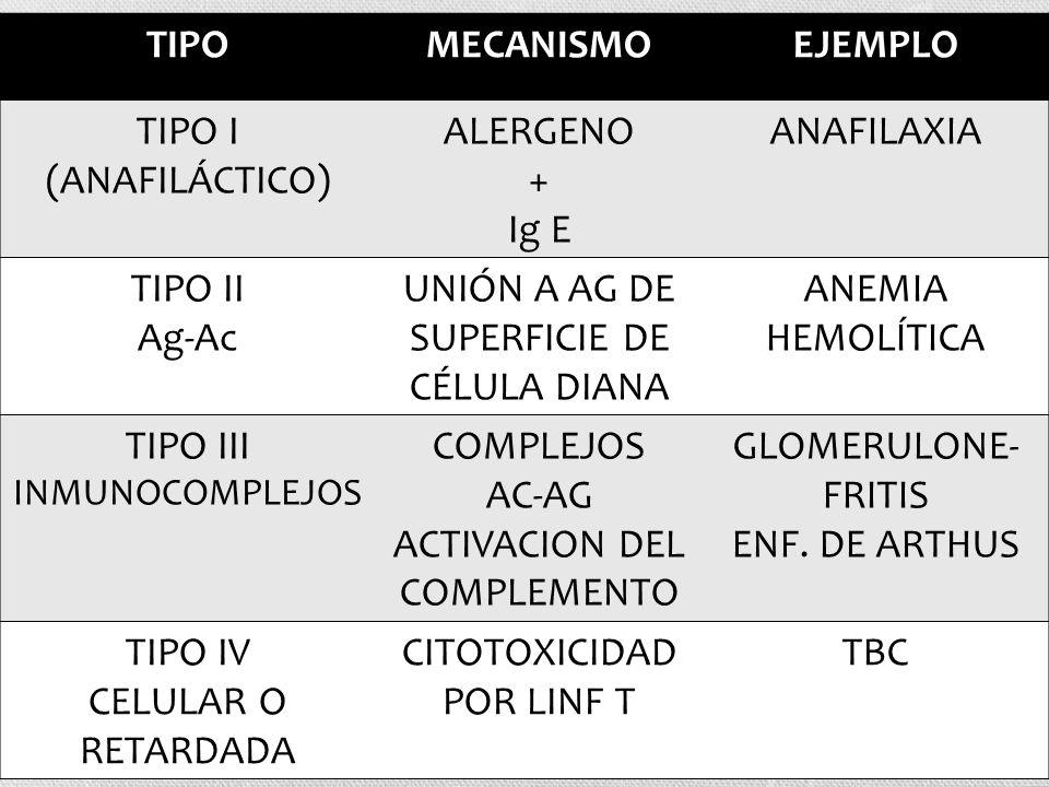 TIPOMECANISMOEJEMPLO TIPO I (ANAFILÁCTICO) ALERGENO + Ig E ANAFILAXIA TIPO II Ag-Ac UNIÓN A AG DE SUPERFICIE DE CÉLULA DIANA ANEMIA HEMOLÍTICA TIPO II