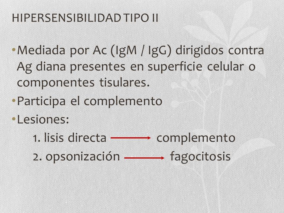 HIPERSENSIBILIDAD TIPO II Mediada por Ac (IgM / IgG) dirigidos contra Ag diana presentes en superficie celular o componentes tisulares. Participa el c
