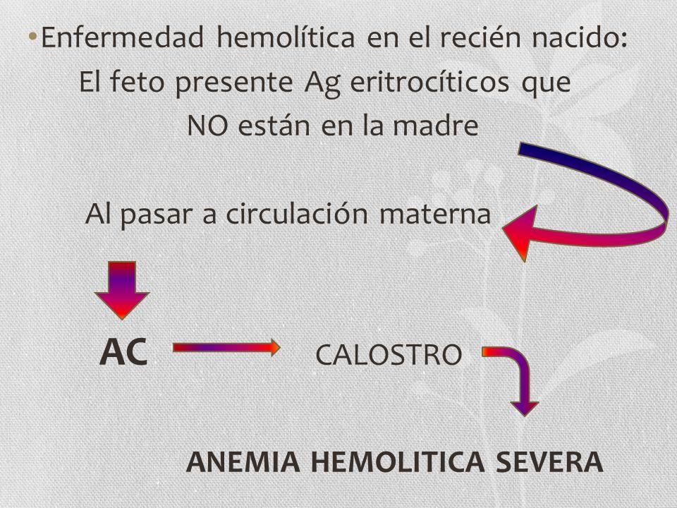 Enfermedad hemolítica en el recién nacido: El feto presente Ag eritrocíticos que NO están en la madre Al pasar a circulación materna AC CALOSTRO ANEMI