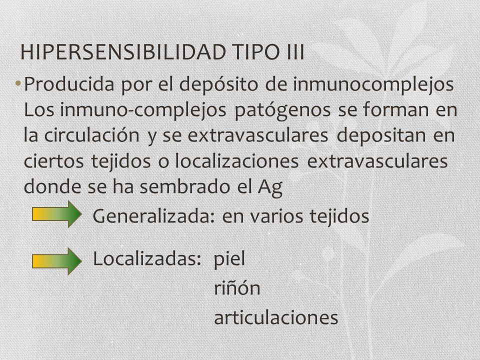 HIPERSENSIBILIDAD TIPO III Producida por el depósito de inmunocomplejos Los inmuno-complejos patógenos se forman en la circulación y se extravasculare