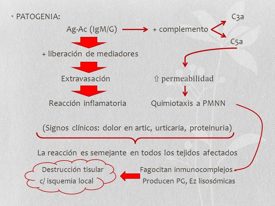 PATOGENIA: C3a Ag-Ac (IgM/G) + complemento C5a + liberación de mediadores Extravasación permeabilidad Reacción inflamatoria Quimiotaxis a PMNN (Signos