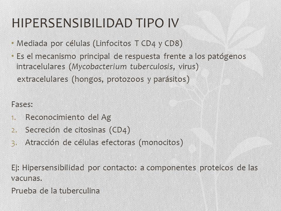 HIPERSENSIBILIDAD TIPO IV Mediada por células (Linfocitos T CD4 y CD8) Es el mecanismo principal de respuesta frente a los patógenos intracelulares (M