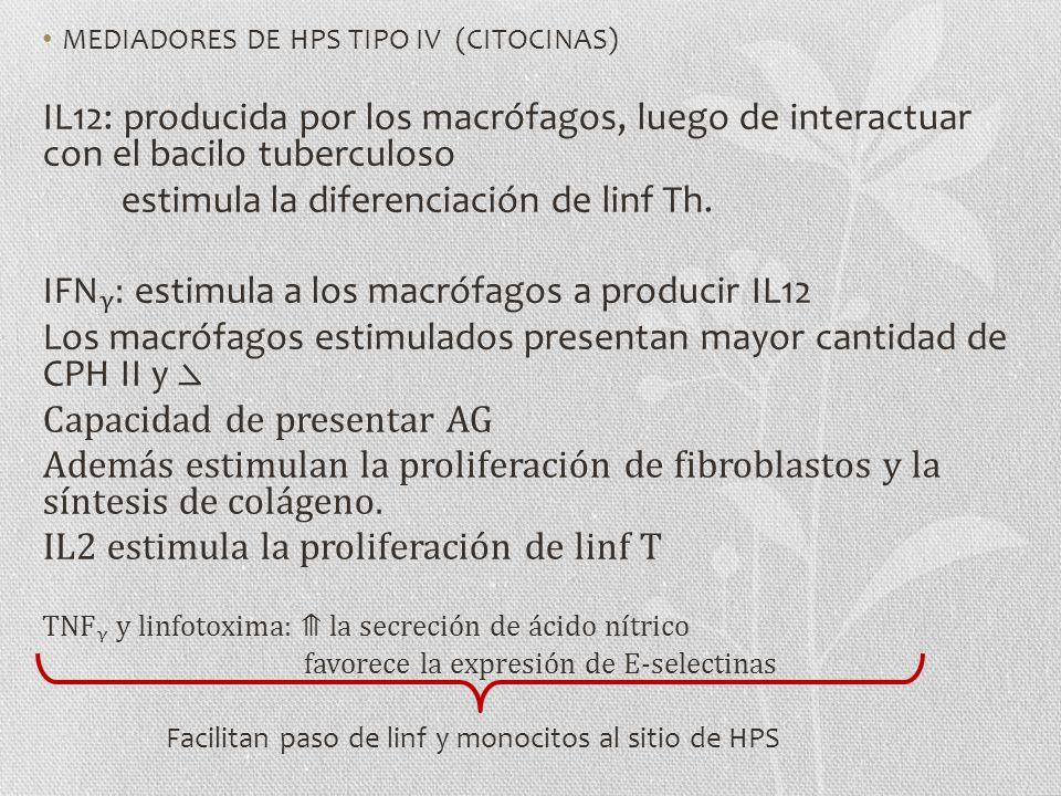 MEDIADORES DE HPS TIPO IV (CITOCINAS) IL12: producida por los macrófagos, luego de interactuar con el bacilo tuberculoso estimula la diferenciación de