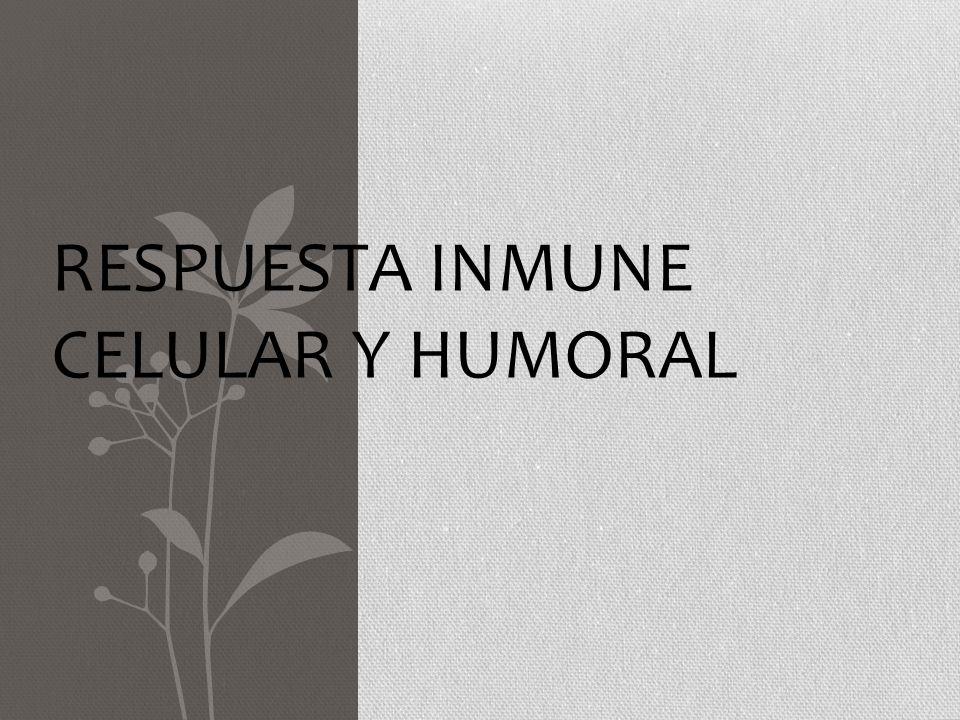 INMUNIDAD HUMORAL: mediada por AC solubles, producidos por los linfocitos B AC neutralización directa de AG activación del complemento + de células efectoras (PMNN y macrófagos)