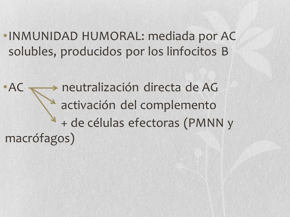 INMUNIDAD HUMORAL: mediada por AC solubles, producidos por los linfocitos B AC neutralización directa de AG activación del complemento + de células ef