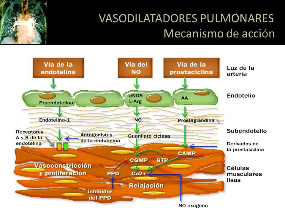 ENDOTELINA 1: Modulador de la vasoconstricción, división músculo liso, proliferación celular e hipertrofia vascular Aumentada a nivel pulmonar y sérica en HTP y se correlaciona con la severidad Tipo A: Músculo liso vascular pulmonar Tipo B: Endotelio y músculo liso vascular pulmonar VASODILATADORES PULMONARES Antagonistas del receptor de endotelina Respir Care 2007;52(7):885– 899