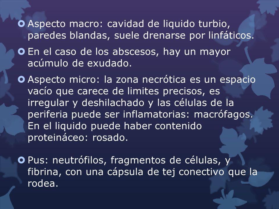 Aspecto macro: cavidad de liquido turbio, paredes blandas, suele drenarse por linfáticos. En el caso de los abscesos, hay un mayor acúmulo de exudado.
