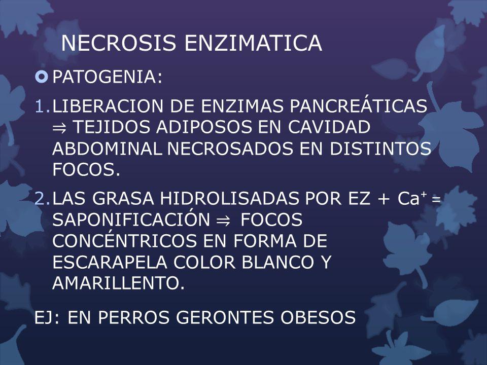 NECROSIS ENZIMATICA PATOGENIA: 1.LIBERACION DE ENZIMAS PANCREÁTICAS TEJIDOS ADIPOSOS EN CAVIDAD ABDOMINAL NECROSADOS EN DISTINTOS FOCOS. 2.LAS GRASA H