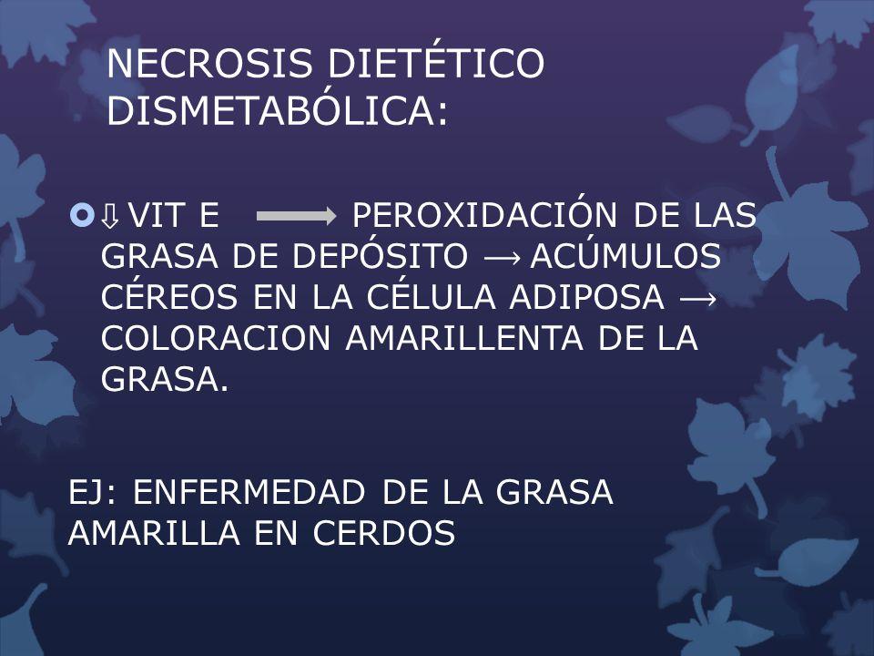 NECROSIS DIETÉTICO DISMETABÓLICA: VIT E PEROXIDACIÓN DE LAS GRASA DE DEPÓSITO ACÚMULOS CÉREOS EN LA CÉLULA ADIPOSA COLORACION AMARILLENTA DE LA GRASA.