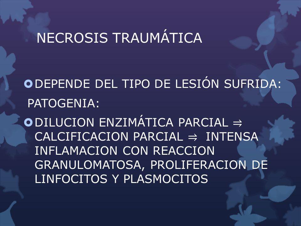 NECROSIS TRAUMÁTICA DEPENDE DEL TIPO DE LESIÓN SUFRIDA: PATOGENIA: DILUCION ENZIMÁTICA PARCIAL CALCIFICACION PARCIAL INTENSA INFLAMACION CON REACCION