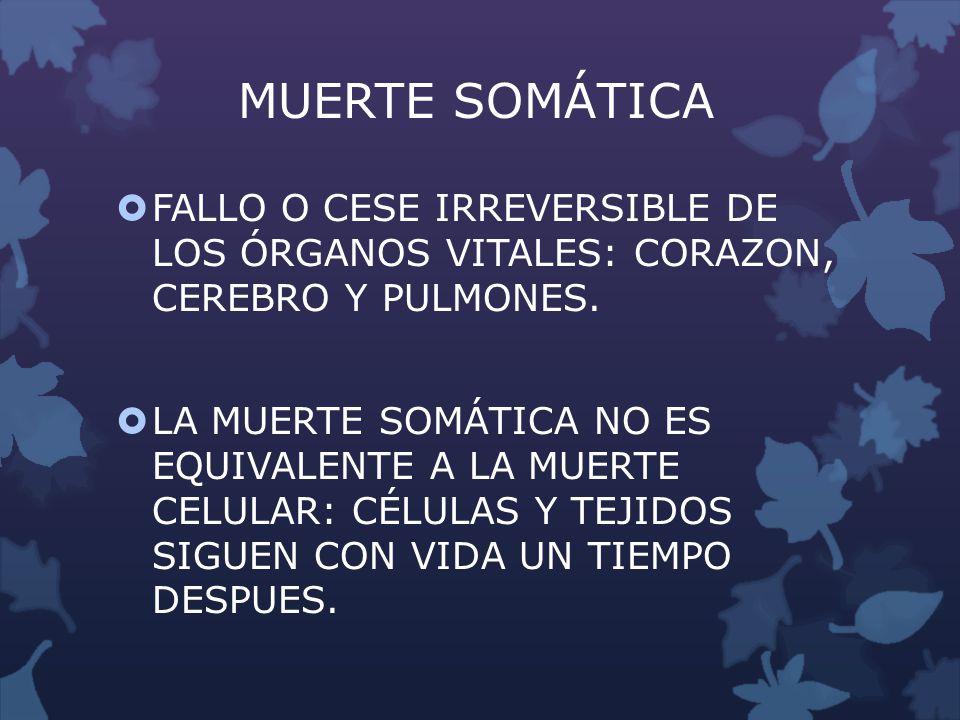 MUERTE SOMÁTICA FALLO O CESE IRREVERSIBLE DE LOS ÓRGANOS VITALES: CORAZON, CEREBRO Y PULMONES. LA MUERTE SOMÁTICA NO ES EQUIVALENTE A LA MUERTE CELULA