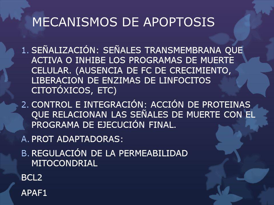 MECANISMOS DE APOPTOSIS 1.SEÑALIZACIÓN: SEÑALES TRANSMEMBRANA QUE ACTIVA O INHIBE LOS PROGRAMAS DE MUERTE CELULAR. (AUSENCIA DE FC DE CRECIMIENTO, LIB
