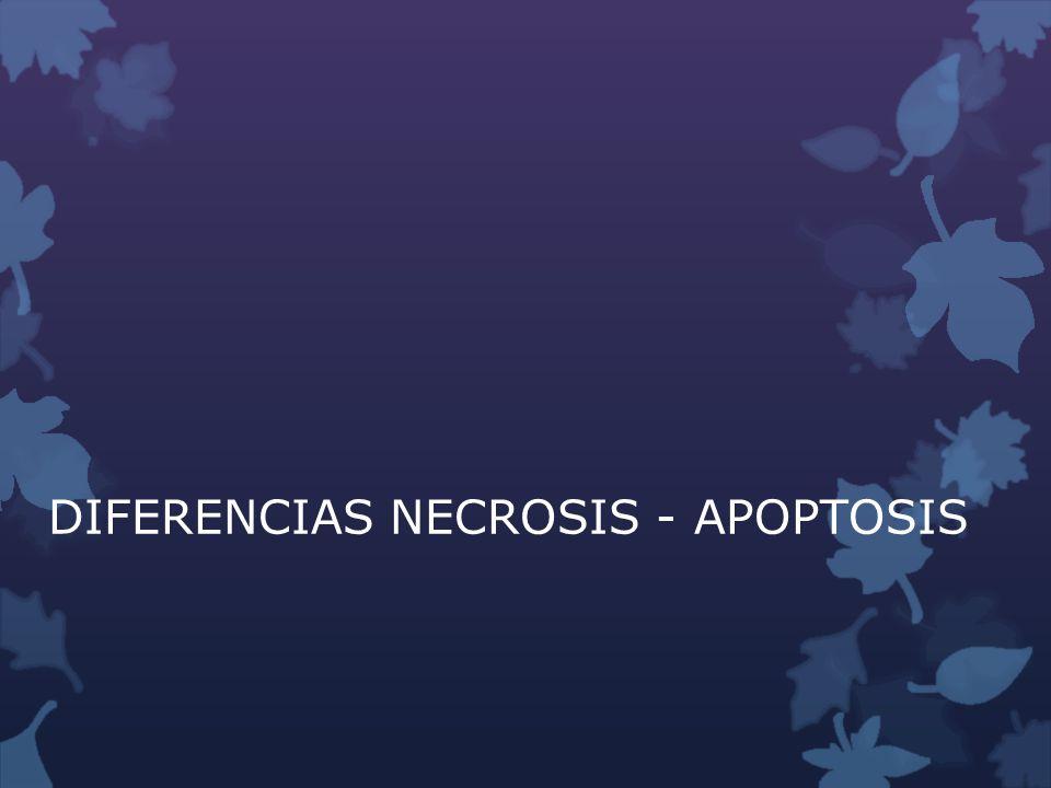 DIFERENCIAS NECROSIS - APOPTOSIS