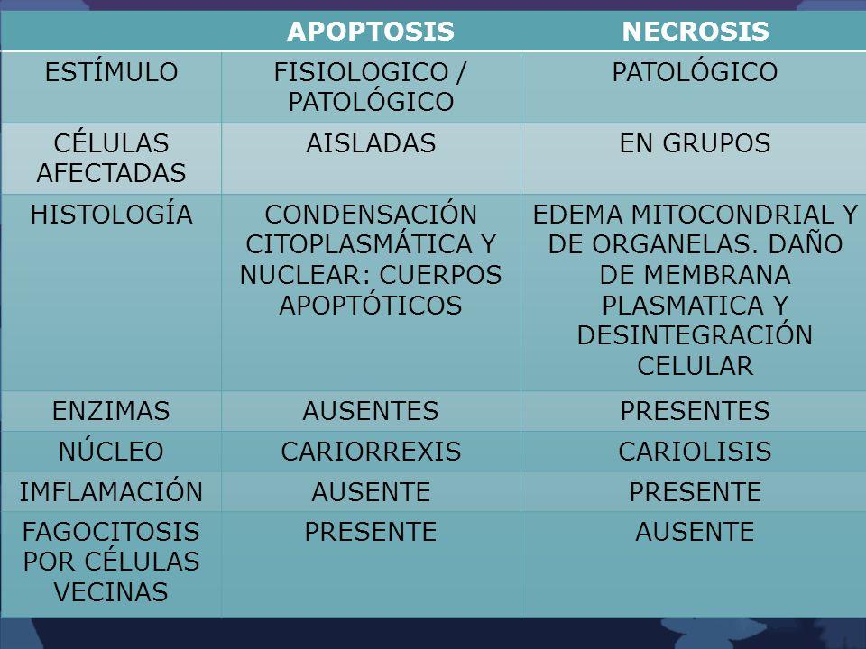 APOPTOSISNECROSIS ESTÍMULOFISIOLOGICO / PATOLÓGICO PATOLÓGICO CÉLULAS AFECTADAS AISLADASEN GRUPOS HISTOLOGÍACONDENSACIÓN CITOPLASMÁTICA Y NUCLEAR: CUE